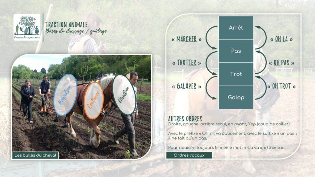 Infographie - Bulles et ordres pour le cheval