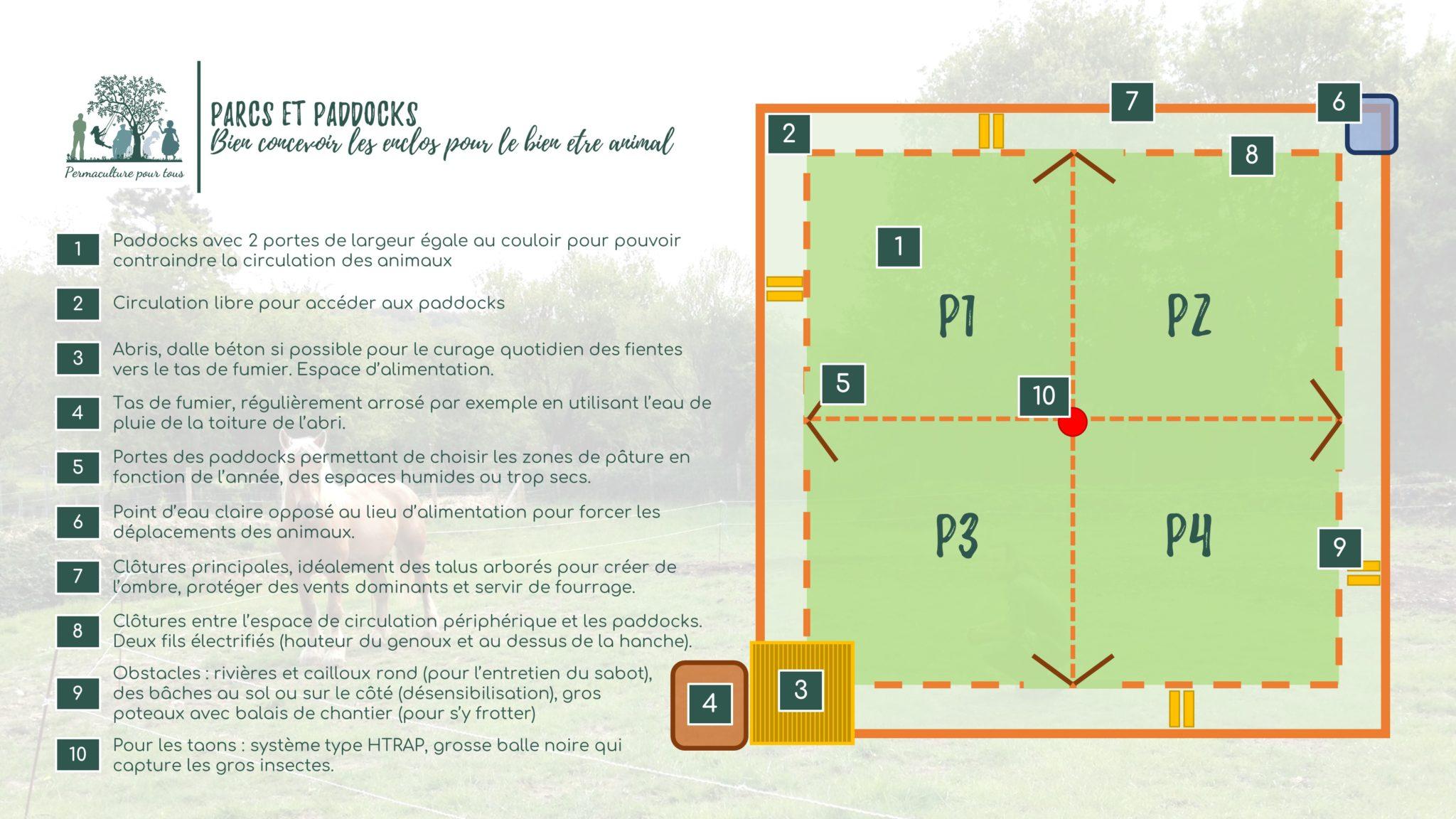 Infographie - Plan type de paddocks