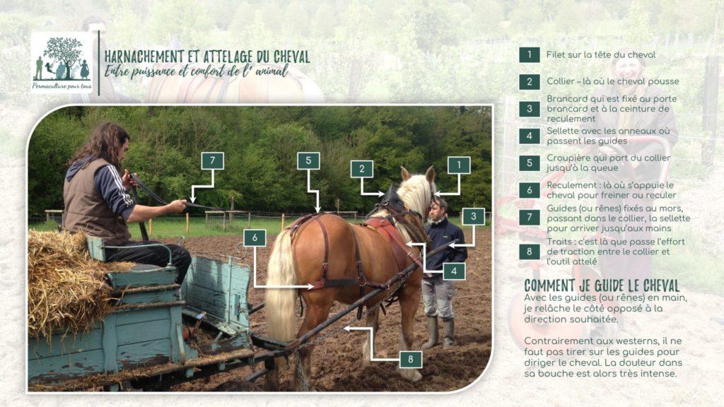 Infographie - Harnachement et attelage du cheval