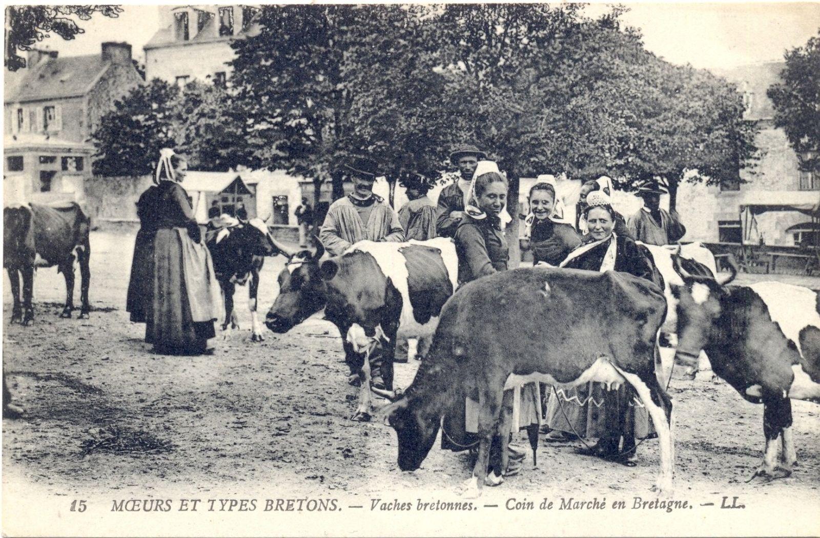 Carte postale des vaches bretonnes