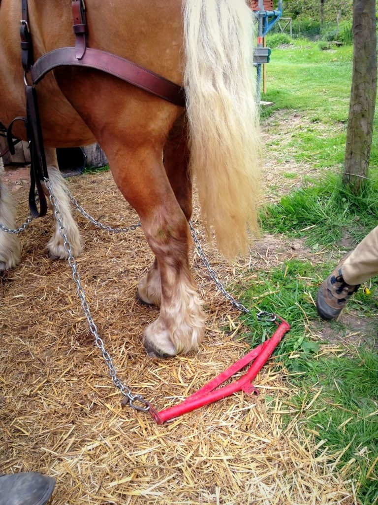 Traits (chaines) du cheval