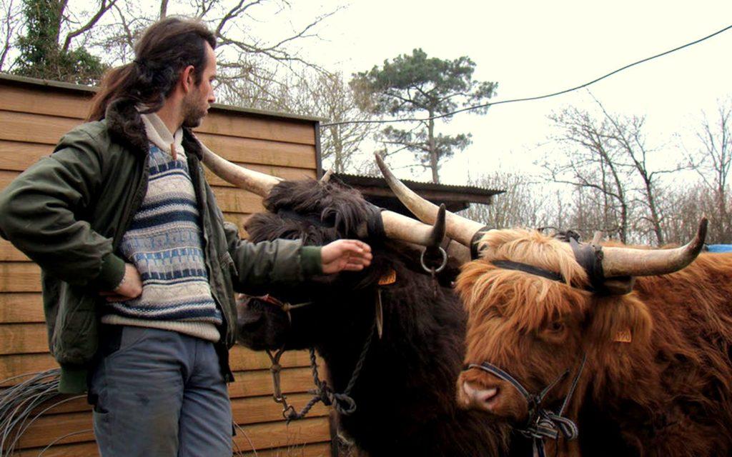 Baptiste et ces 2 bœufs Highlands.
